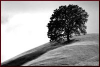 Alone on a Hill w border DSC_0070
